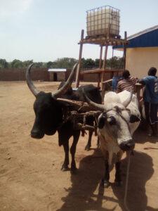 Pastoralism CAR